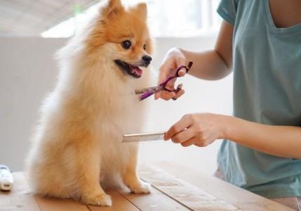 Hunde scheren